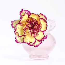 Carnation and pink vase