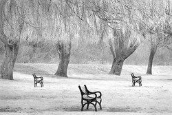 Trees and Seats