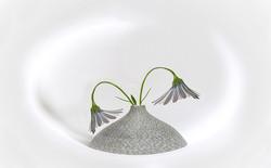 Osteospermum in mottled vase