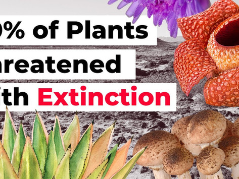 40% of Plants Threatened with Extinction