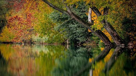 bord_de_rivière_automne.jpg