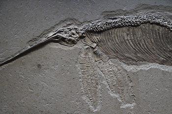 ichthyosaure.jpg