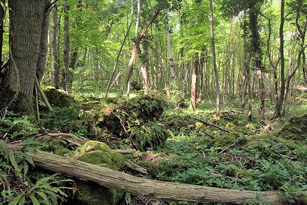 Forêt de la Comté.jpg