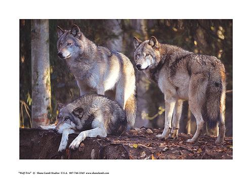 Alaska Wolf Trio (paper)