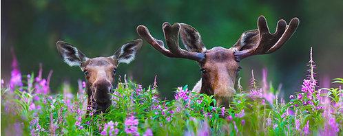 Peek-A-Moose (metal)