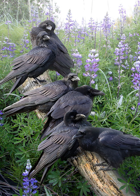 Raven Rendezvous - Kitchen Board
