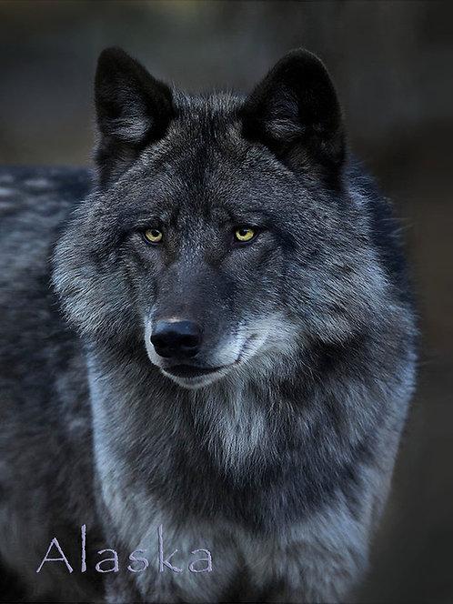 Black Wolf Portrait - Kitchen Board