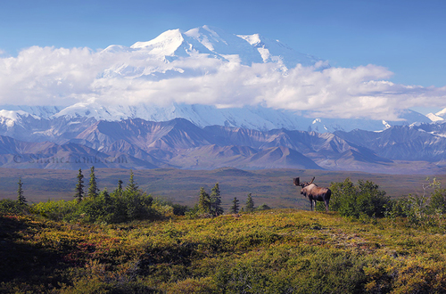 Mountain+Majesty+-+Denali-3 - Copy - Cop