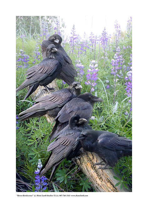 Raven Rendezvous (paper)