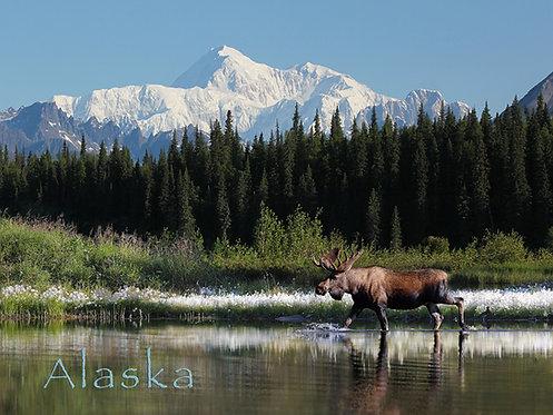 Moose & Cotton Grass - Kitchen Board