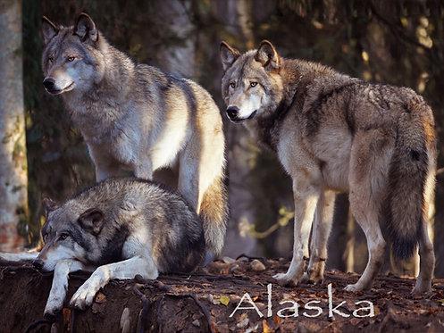 Alaska Wolf Trio - Kitchen Board