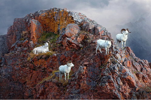 Red Rock Rams