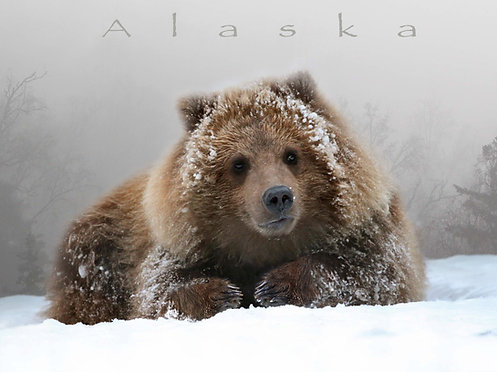 Grizzly Cub Portrait- Kitchen Board