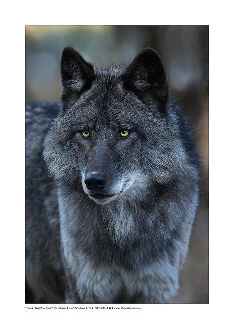 Black Wolf Portrait (paper)