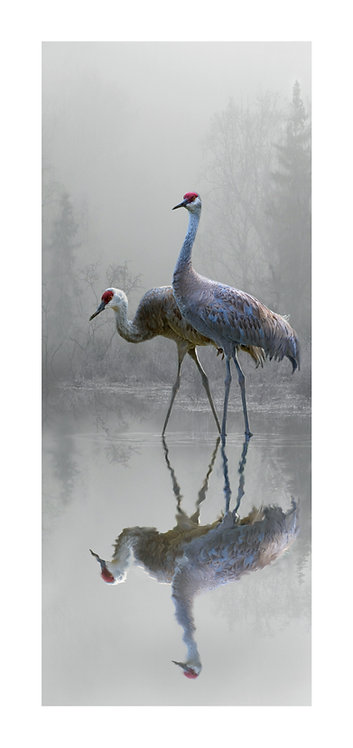 Misty Morning Cranes