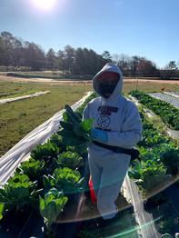 farm harvest volunteer