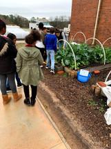 boys girls club teaching garden harvest