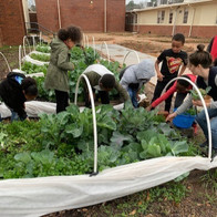 deanna boys girls club teaching garden