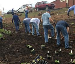 volunteers farm planting the pollinator garden