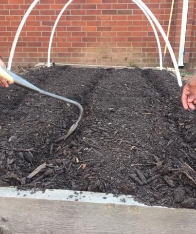 sowing seeds teaching garden
