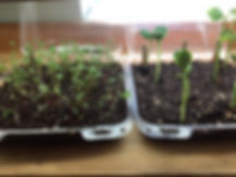 mini greenhouse.jpg