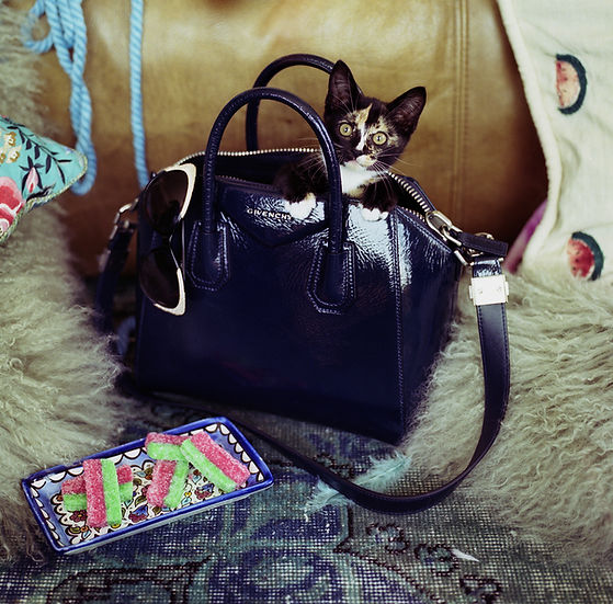 CatStills_StarInherGivenchy_meow025.jpg