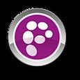 Pop31_logo