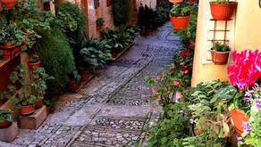 One Day in Spello, Italy