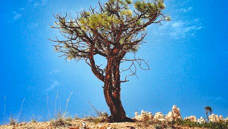 A árvore das bençãos
