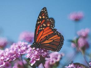 Transformação e arrependimento