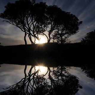 Reflection.jpg