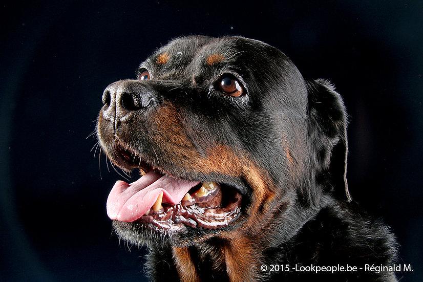 SEANCE PHOTO / SHOOTING STUDIO 30 MINUTES ANIMAL DE COMPAGNIE + 1 PHOTO 20X30 CM