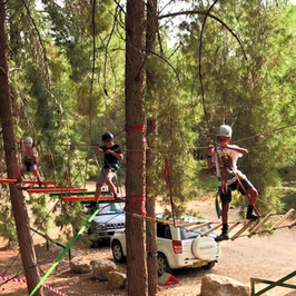 גשר חבלים בצמרות העצים