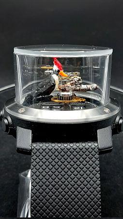 woodpecker 1.jpg