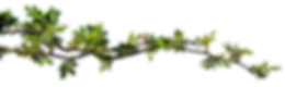 branch-3316987_960_720_edited.png