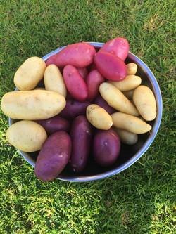 Karri Couuntry Gourmet Potatoes