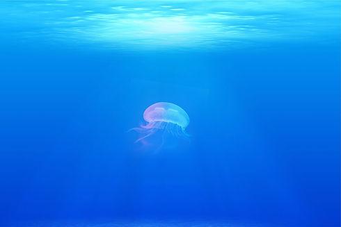 jellyfish-698521_1920.jpg