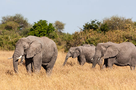 ellie bell photography, tanzania, east africa, serengeti, elephants