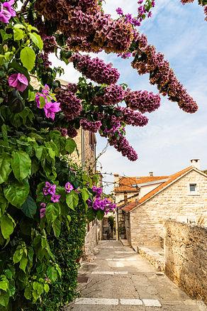 ellie bell photography, flowers, croatia, plants, pathway, hvar, island, adriatic sea, summer, europe