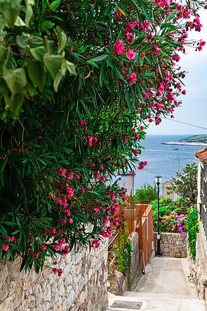 ellie bell photography, croatia, hvar, island, adriatic sea, flowers, view, pathway