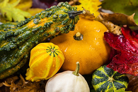 ellie bell photography, food still life, food photography, pumpkin, autumn, halloween, green, orange, red, warm, autumn, leaves, autumn leaves, gourds, ornamental gourds, squash, vegetables