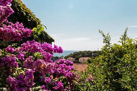 ellie bell photography, dubrovnik, croatia, sea, flowers, europe, view, coast, plants, summer