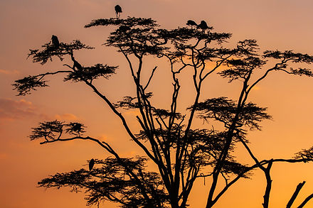 ellie bell photography, tanzania, east africa, serengeti, birds, tree, secretary bird