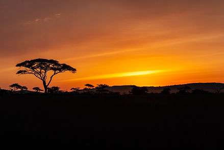 ellie bell photography, tanzania, east africa, serengeti, sunset, acacia, trees
