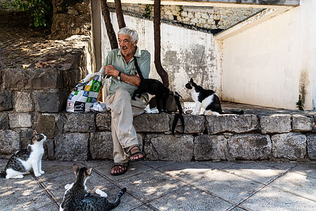 ellie bell photography, croatia, split, adriatic sea, cats, man, strays, feeding, europe, croatian, tourism, holiday, summer