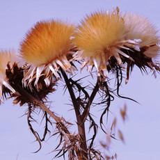 bloem5_klein.JPG