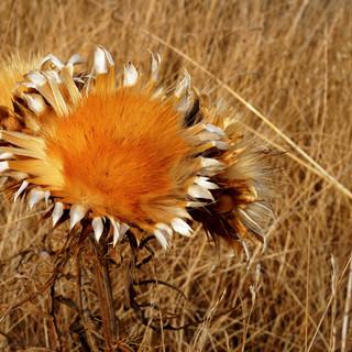 bloem2_klein.jpg