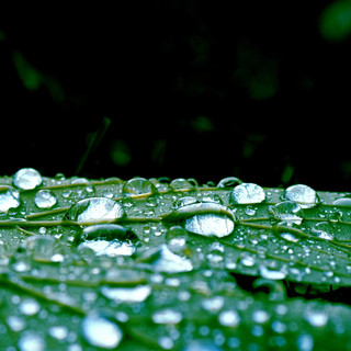 droplets4_klein.JPG