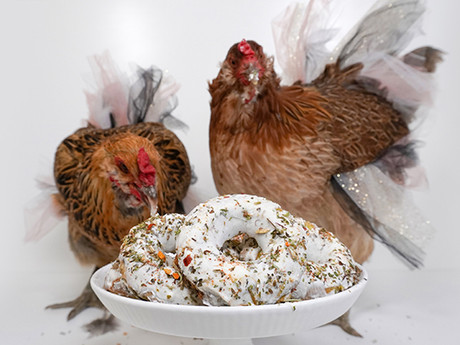 Donut Treats for Chickens