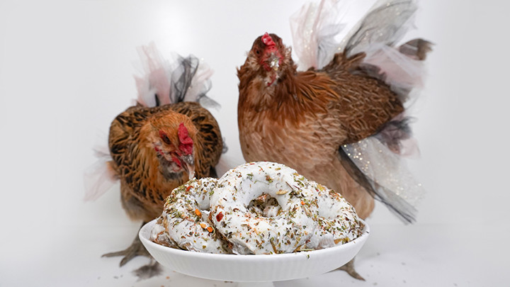 chickens in tutus with donuts